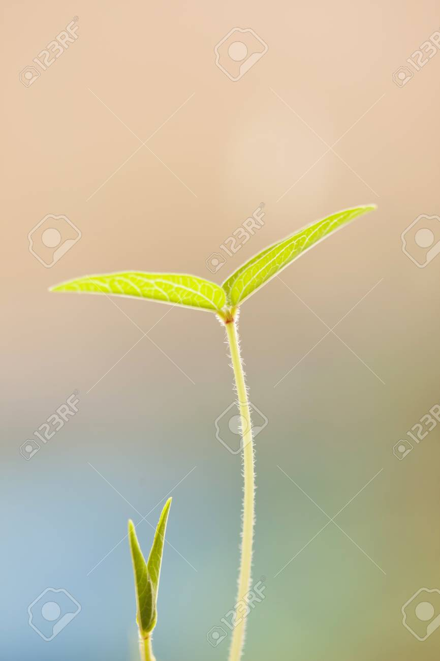 Beautiful young green leaf Stock Photo - 11986442
