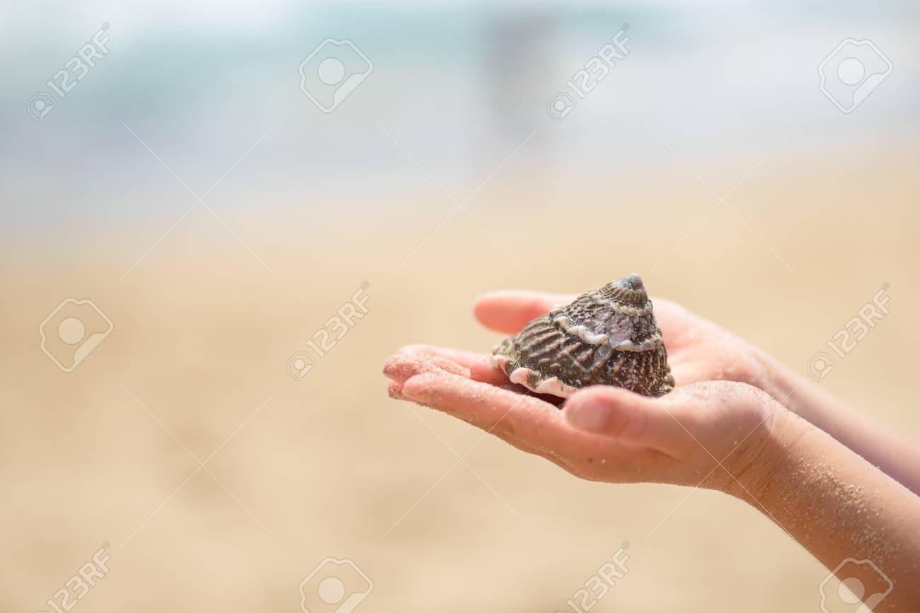 Child hands holding seashell - 106272134