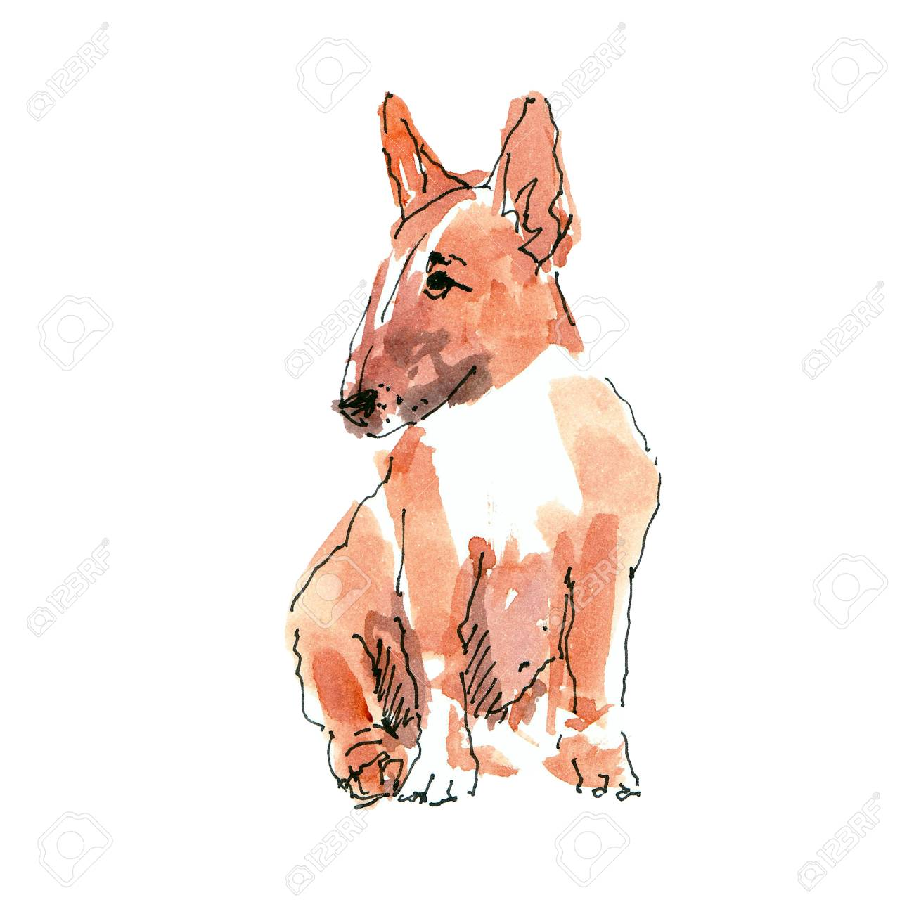 Watercolor illustration of pibull dog sketch isolated on white - 109991146