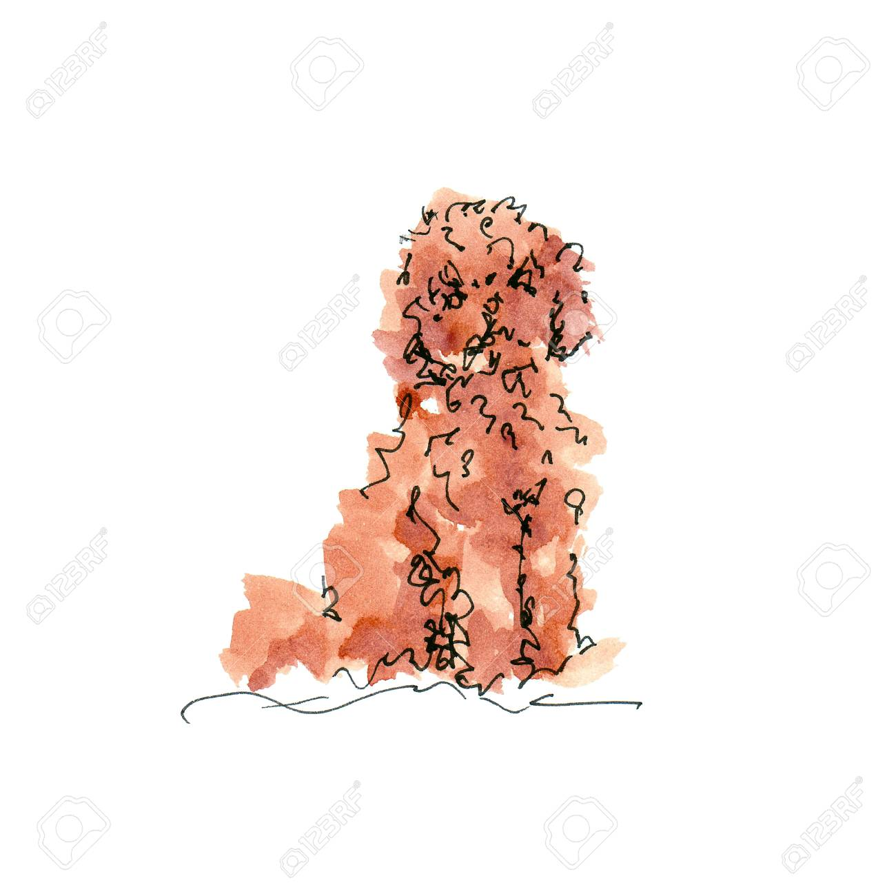 Watercolor illustration of Toy Poodle dog sketch isolated on white - 109991147