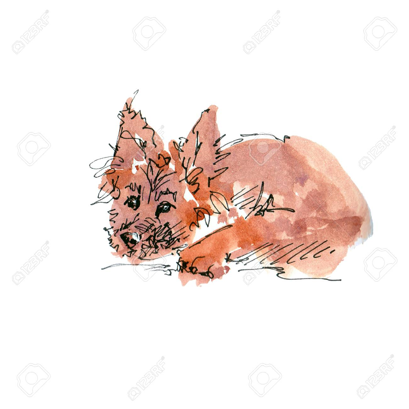 Watercolor illustration of German Shepherd dog sketch isolated on white - 109991153