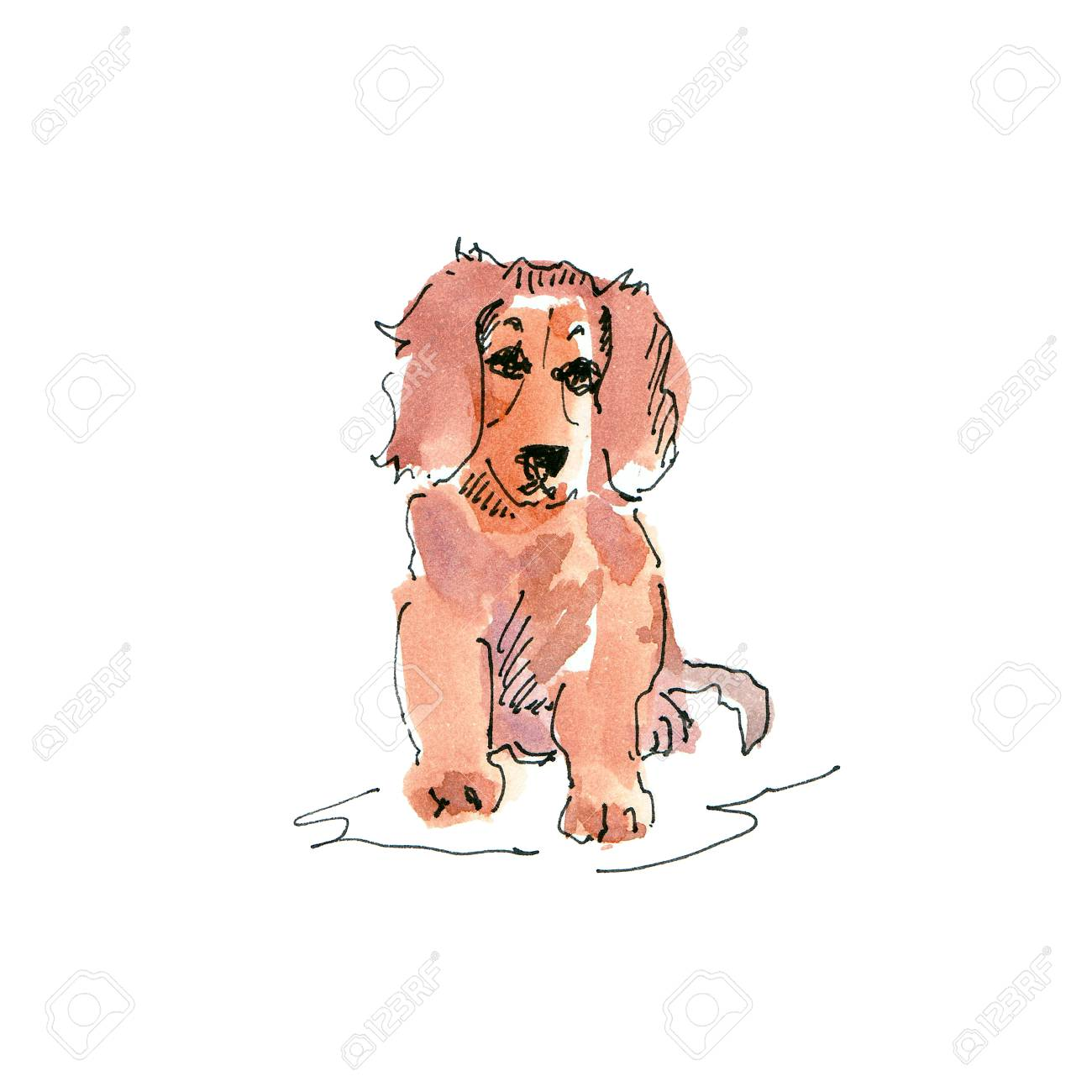 Watercolor Illustration Of Dachshund Puppy Dog Drawing Isolated Stock Photo Picture And Royalty Free Image Image 109991156