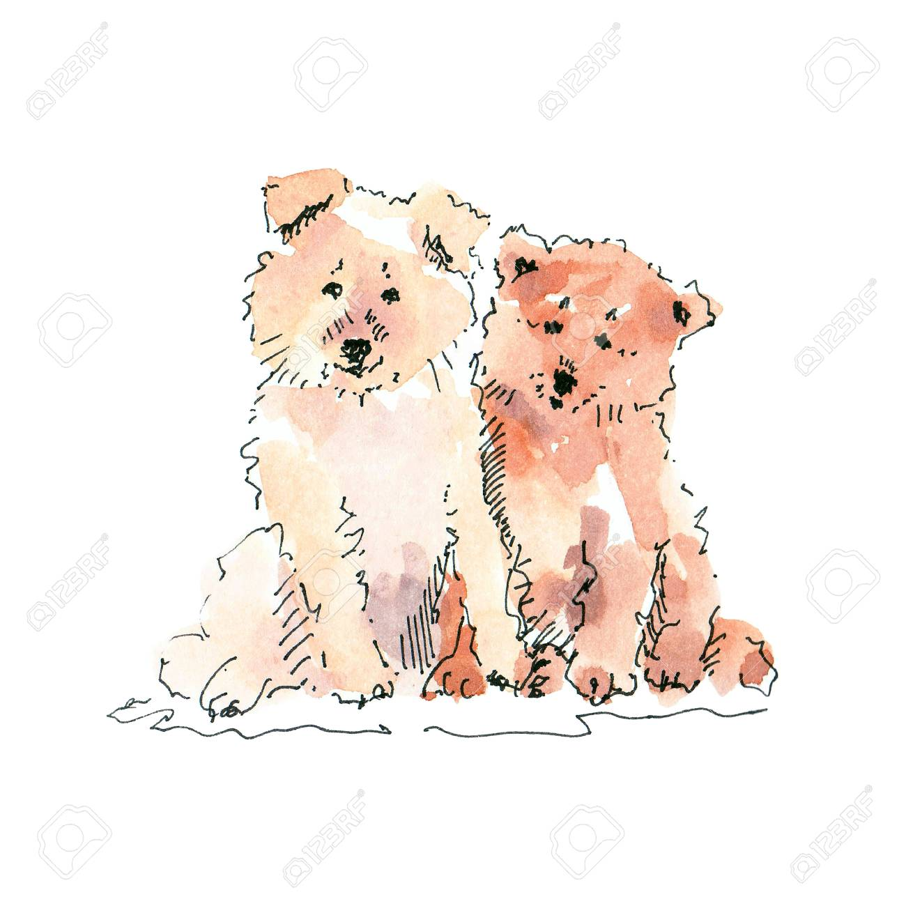 Watercolor illustration of two cute puppies drawing isolated on white - 109991119