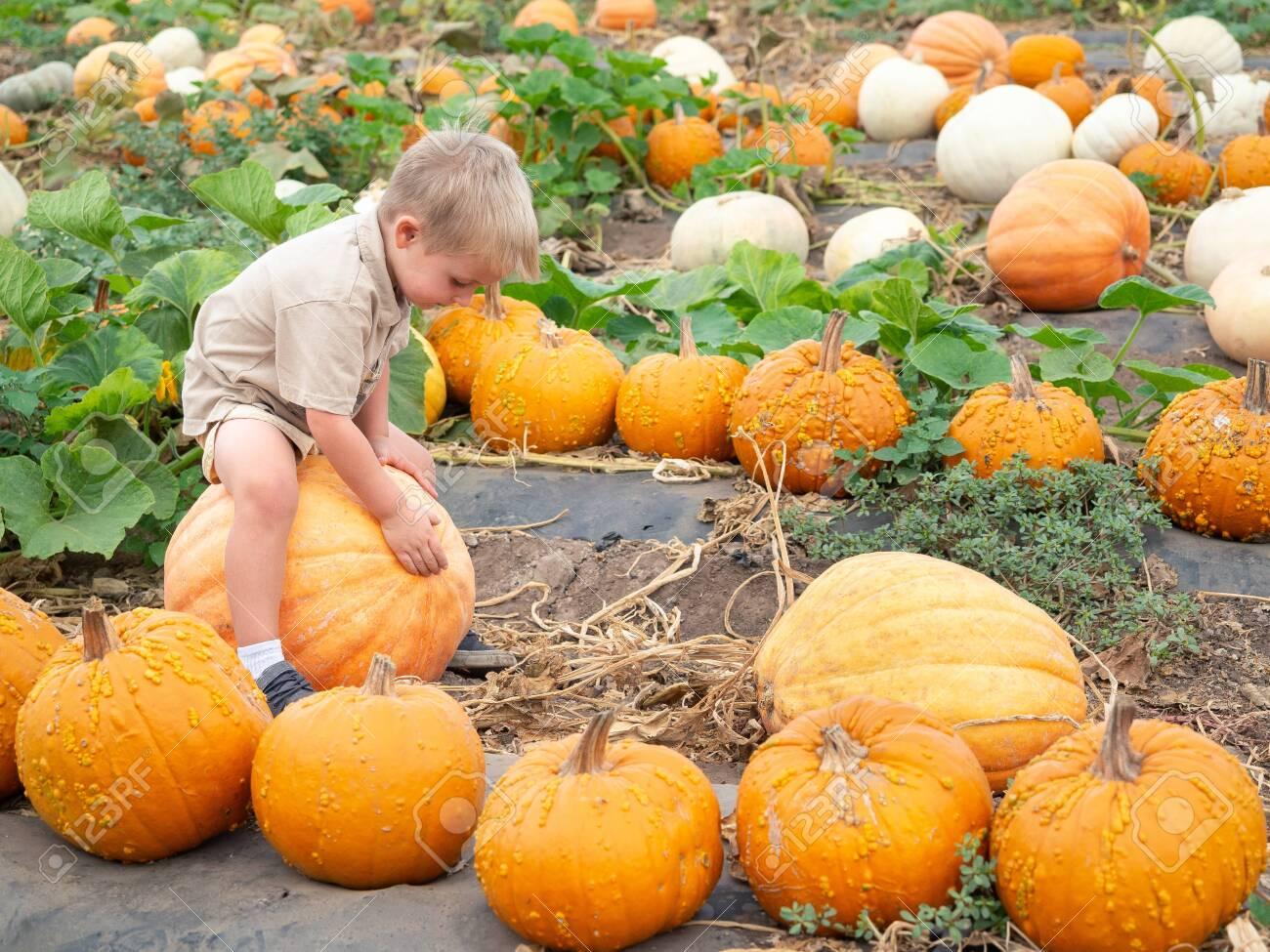 Little boy sitting on big pumpkin on farm patch - 115343931