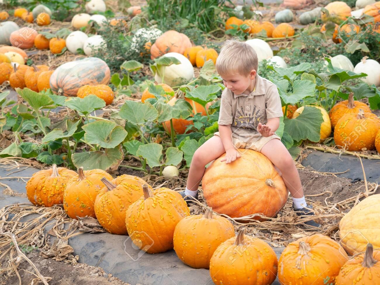 Little boy sitting on big pumpkin on farm patch - 115343659