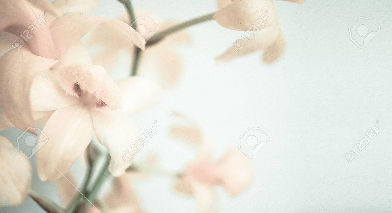 Süße Farbe Orchideen In Weichen Farben Und Unschärfe Stil Für ...
