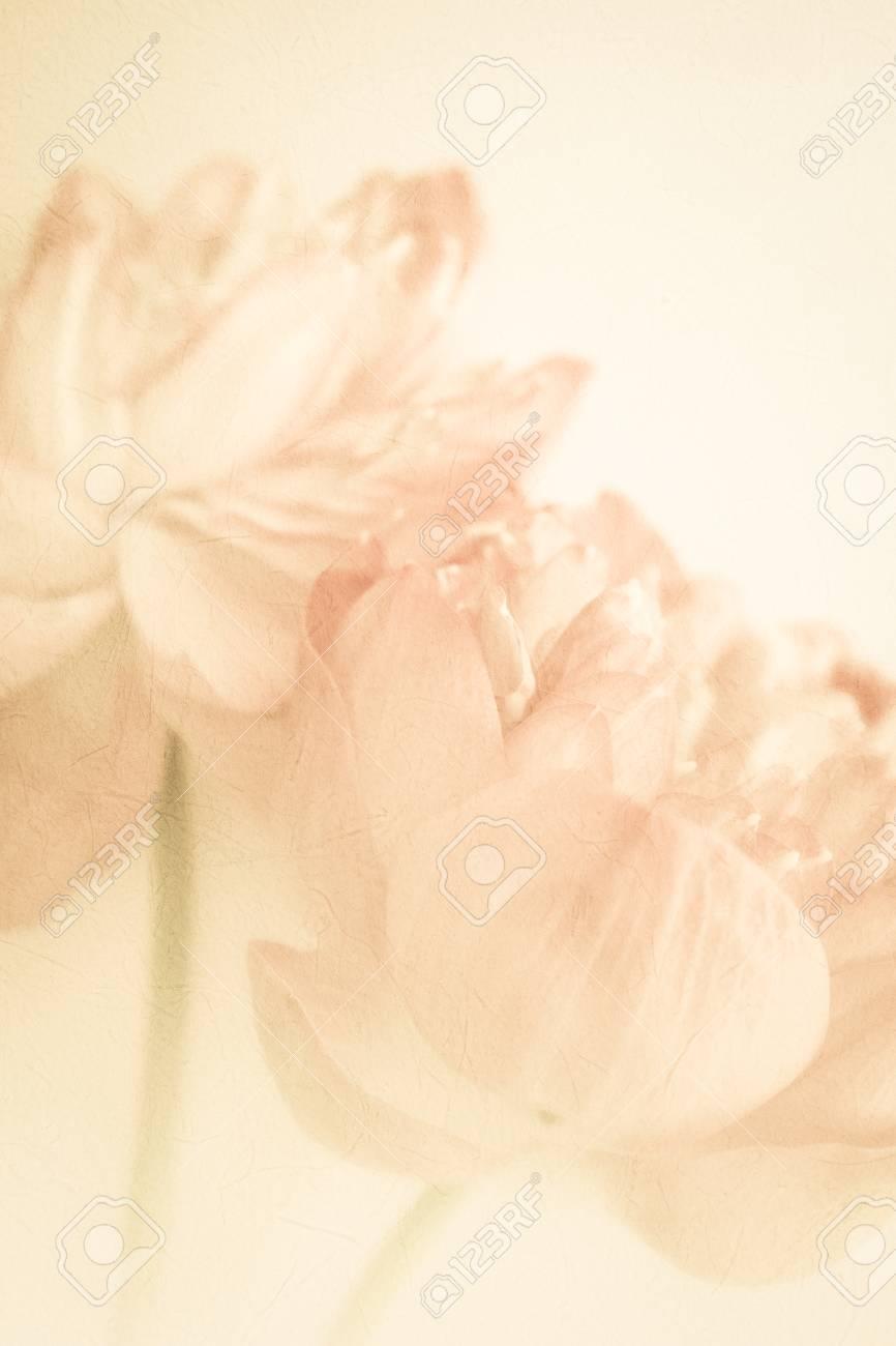 Süße Farbe Lotus In Weichen Farben Und Unschärfe-Stil Auf ...
