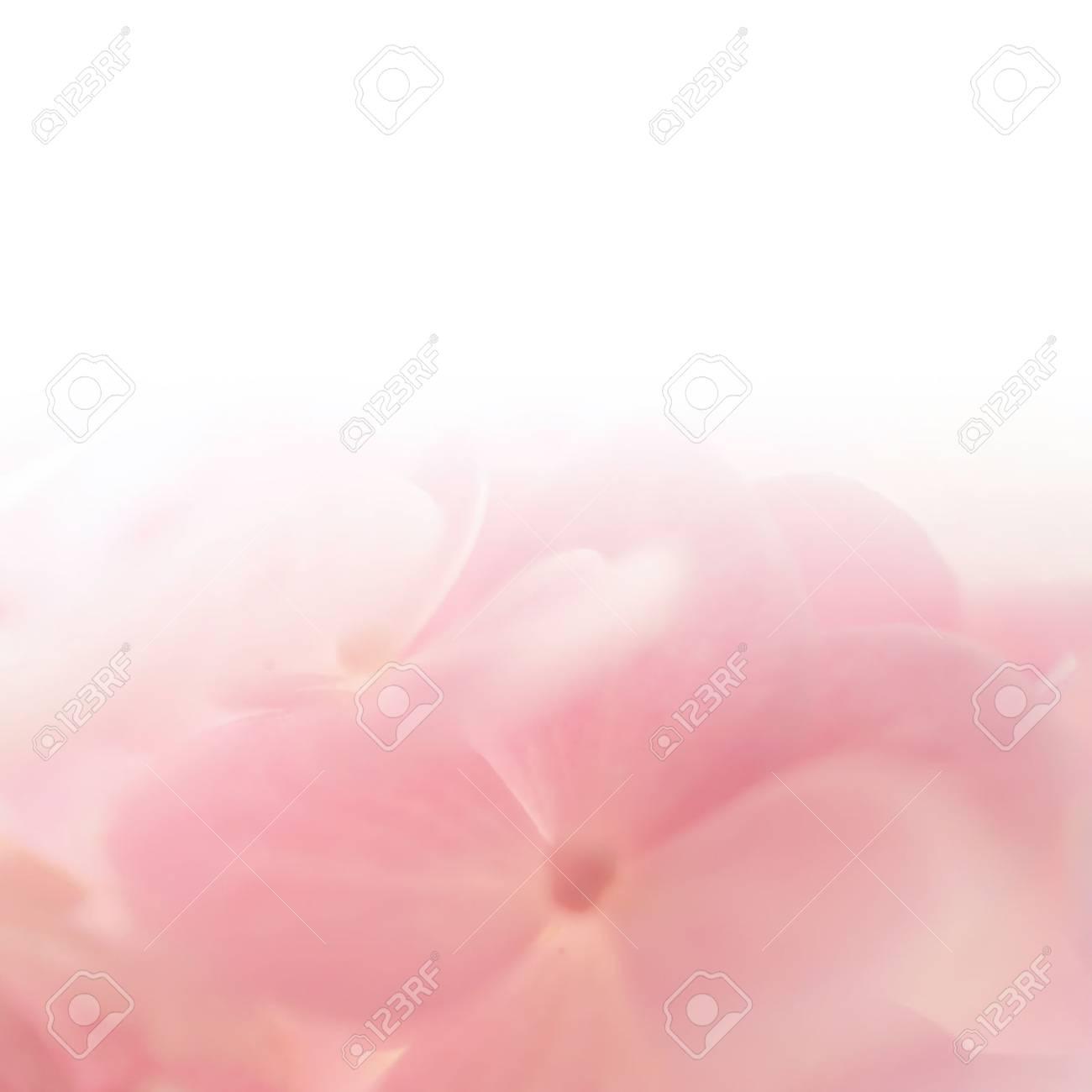 Süße Farbe Hortensie In Weichen Farben Und Unschärfe Stil Für ...