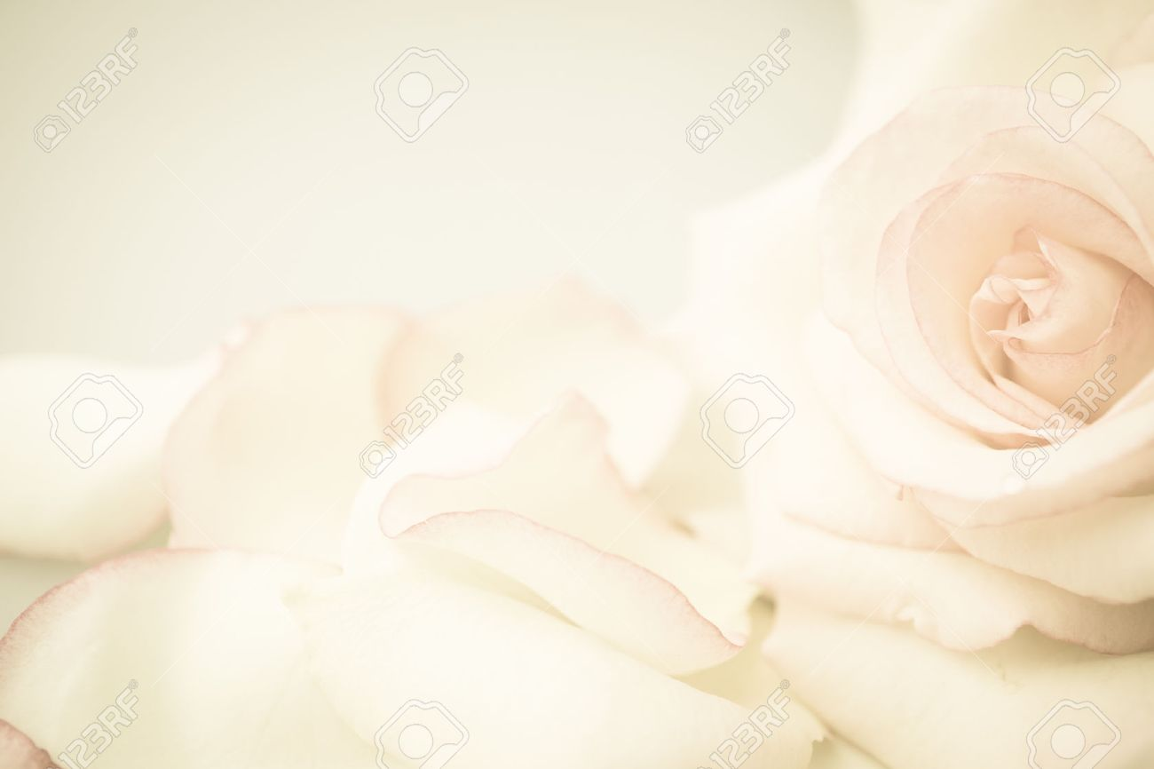 pink rose flower in vintage color style for romantic background - 52219083