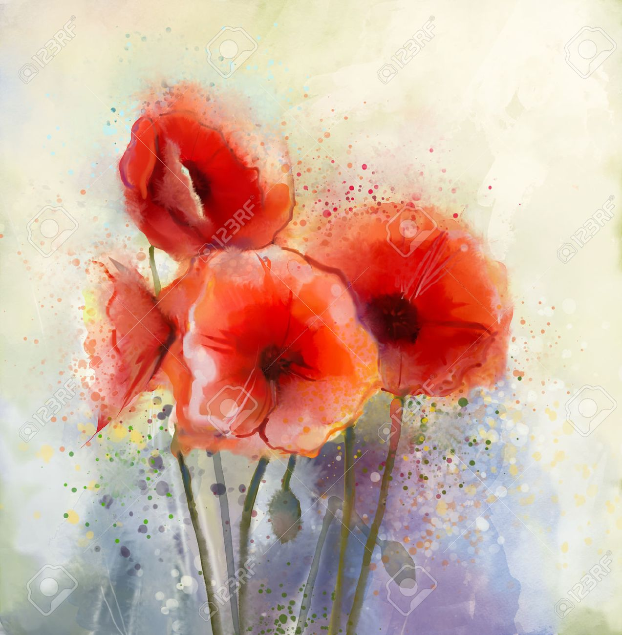 Poppy flower field at night royalty free stock photography image - Water Color Red Poppy Flowers Painting Flowers In Soft Color And Blur Style For Background