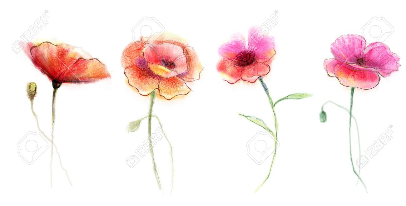 Watercolor painting poppy flower isolated flowers on white stock photo watercolor painting poppy flower isolated flowers on white background set of pink and red poppy flower painting mightylinksfo