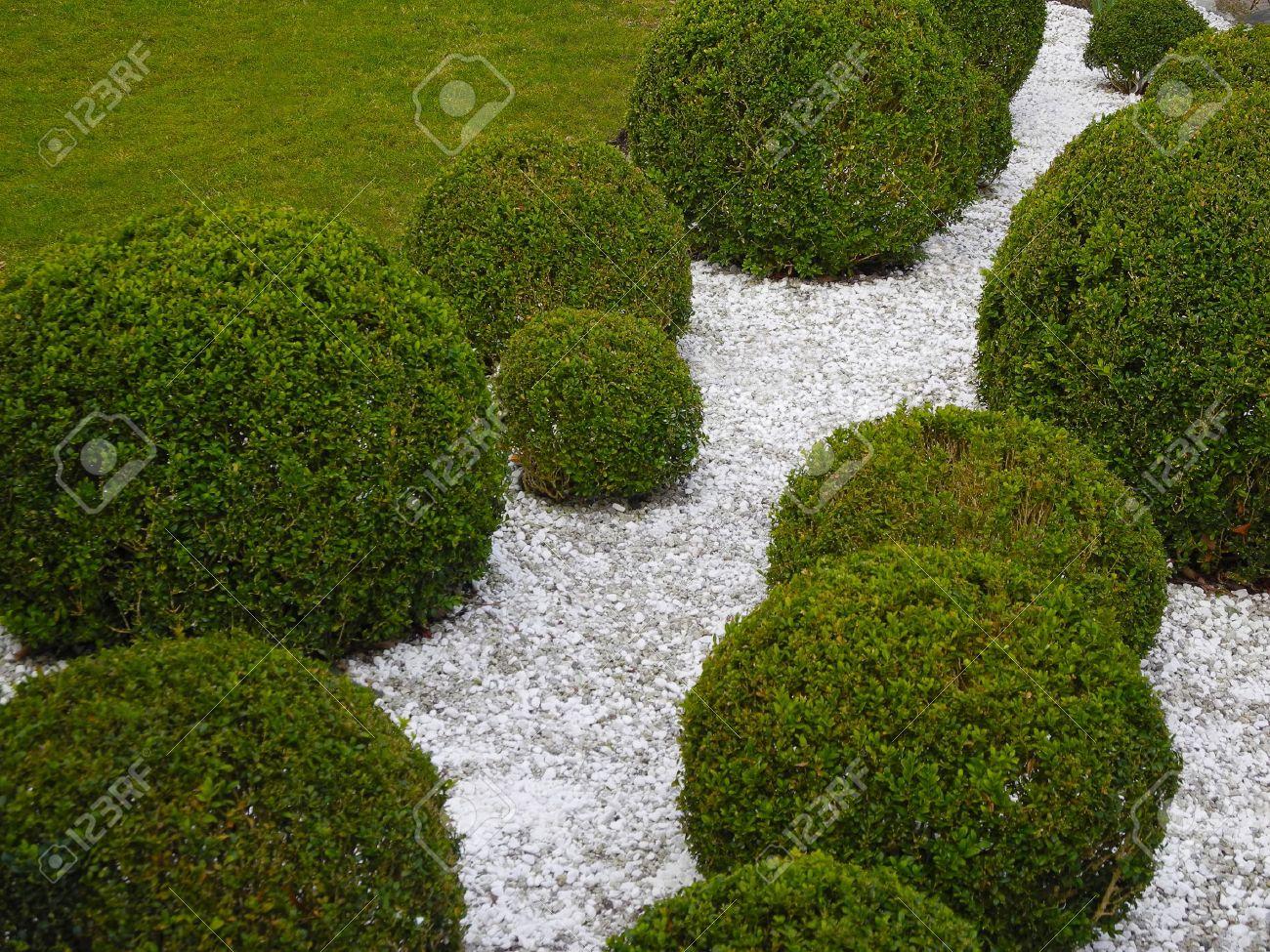 Détail jardin de buis et de gravier blanc