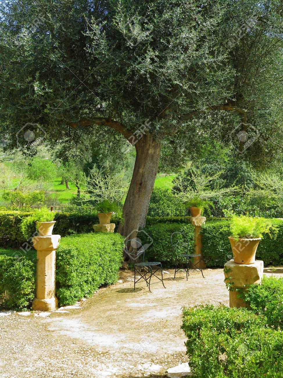 Jardin méditerranéen idyllique avec terrasse, chaises et olivier