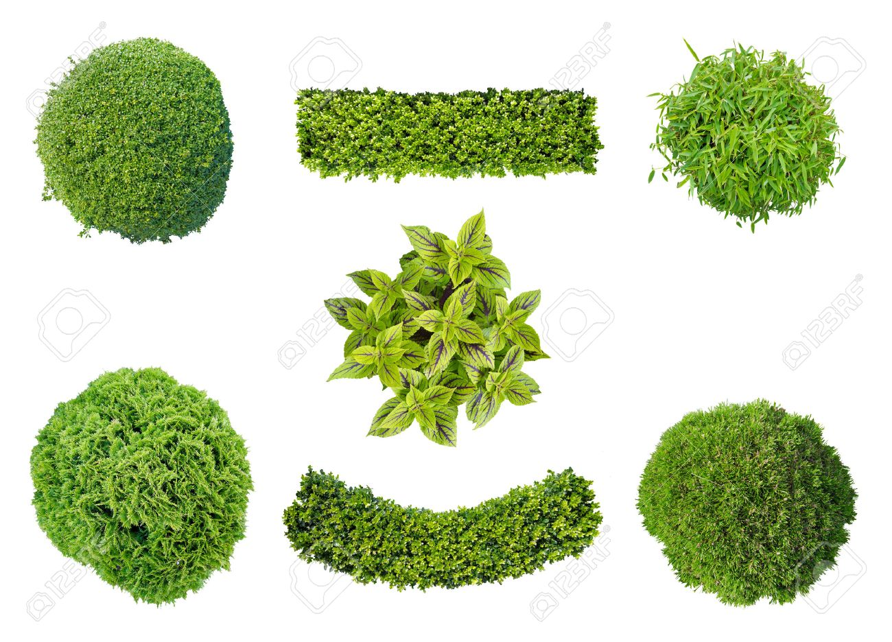 Set Of Plants In Top View Isolated On White Background For Garden And Landscape Architecture Stock