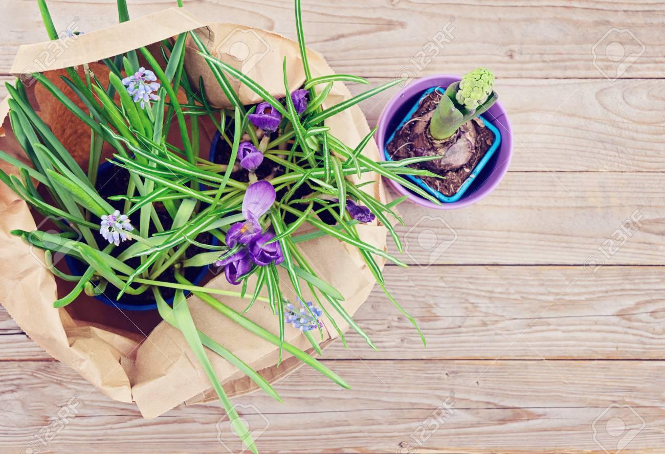 Spring Sale Concept Springtime Potted Natural Spring Flowers