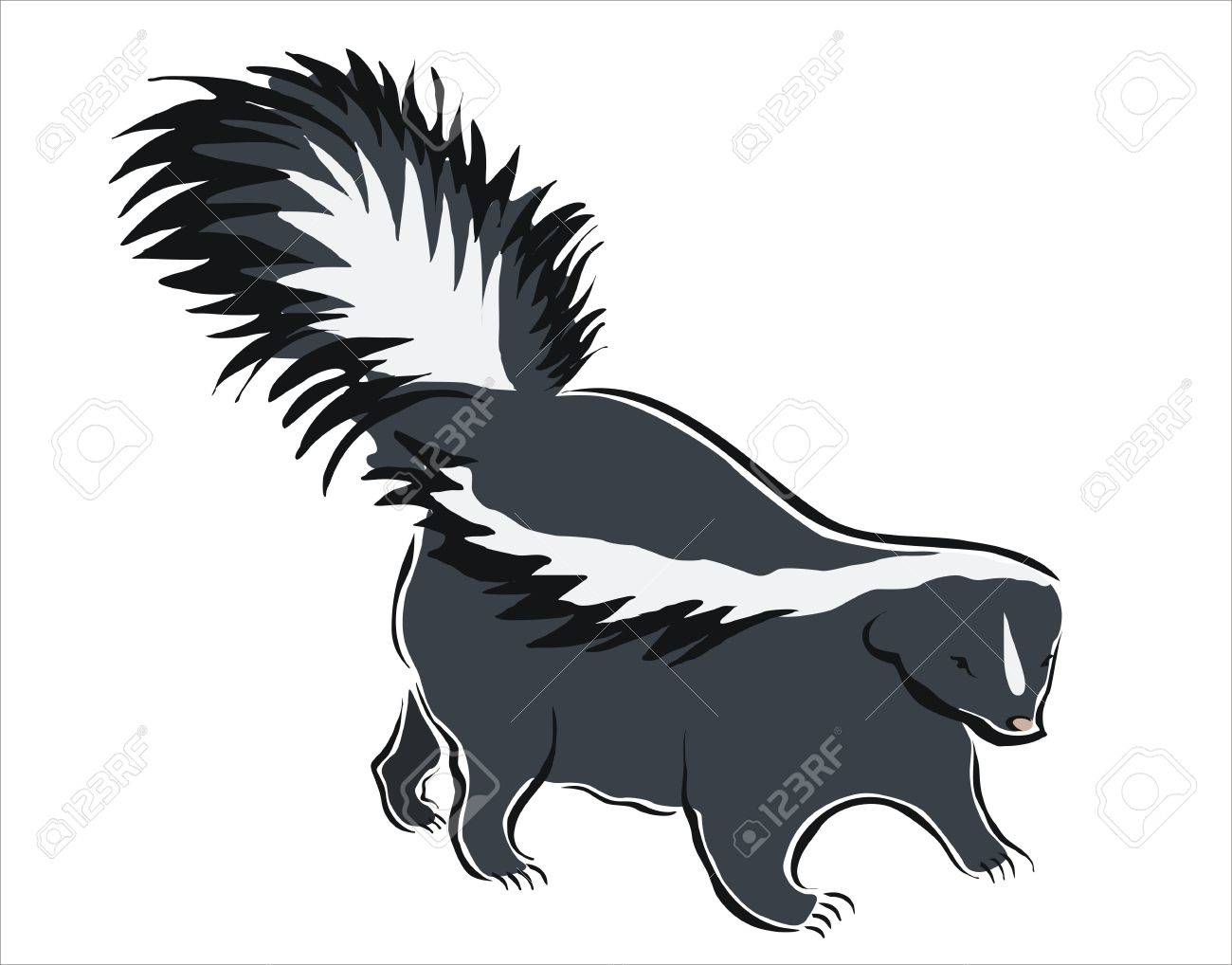 Drawing Of A Black And White Skunk Royalty Free Cliparts Vectors