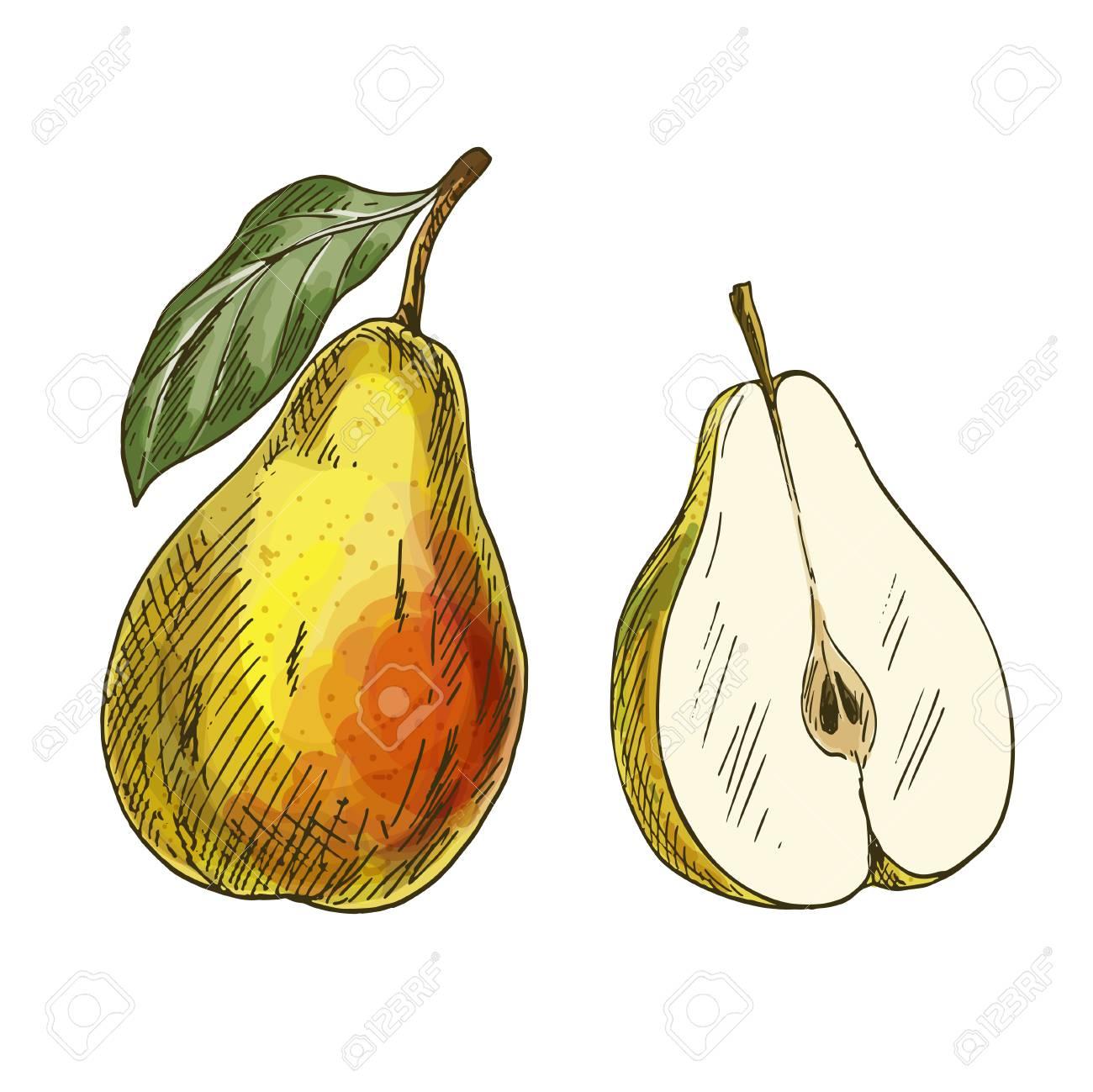 Fantastisch Malvorlagen Für Tropische Früchte Fotos - Beispiel ...