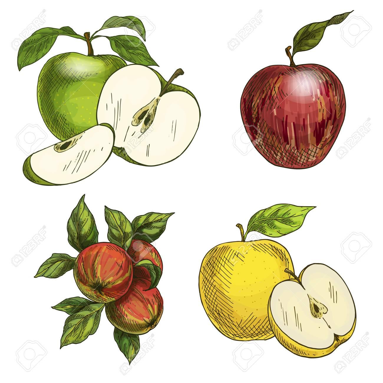 Pfel Mit Blättern Und Hälften Von Früchten. Grüne, Gelbe Und Rote ...