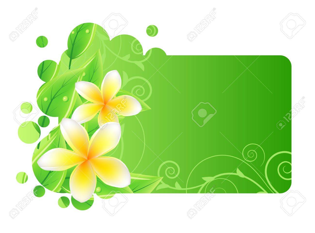 Frame with green leaves and frangipani Stock Vector - 8714495