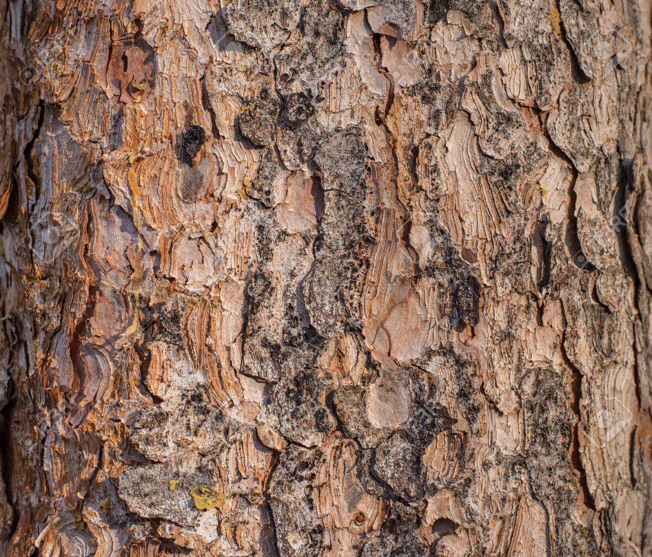 Tree texture background with brown and orange tone. - 115023908