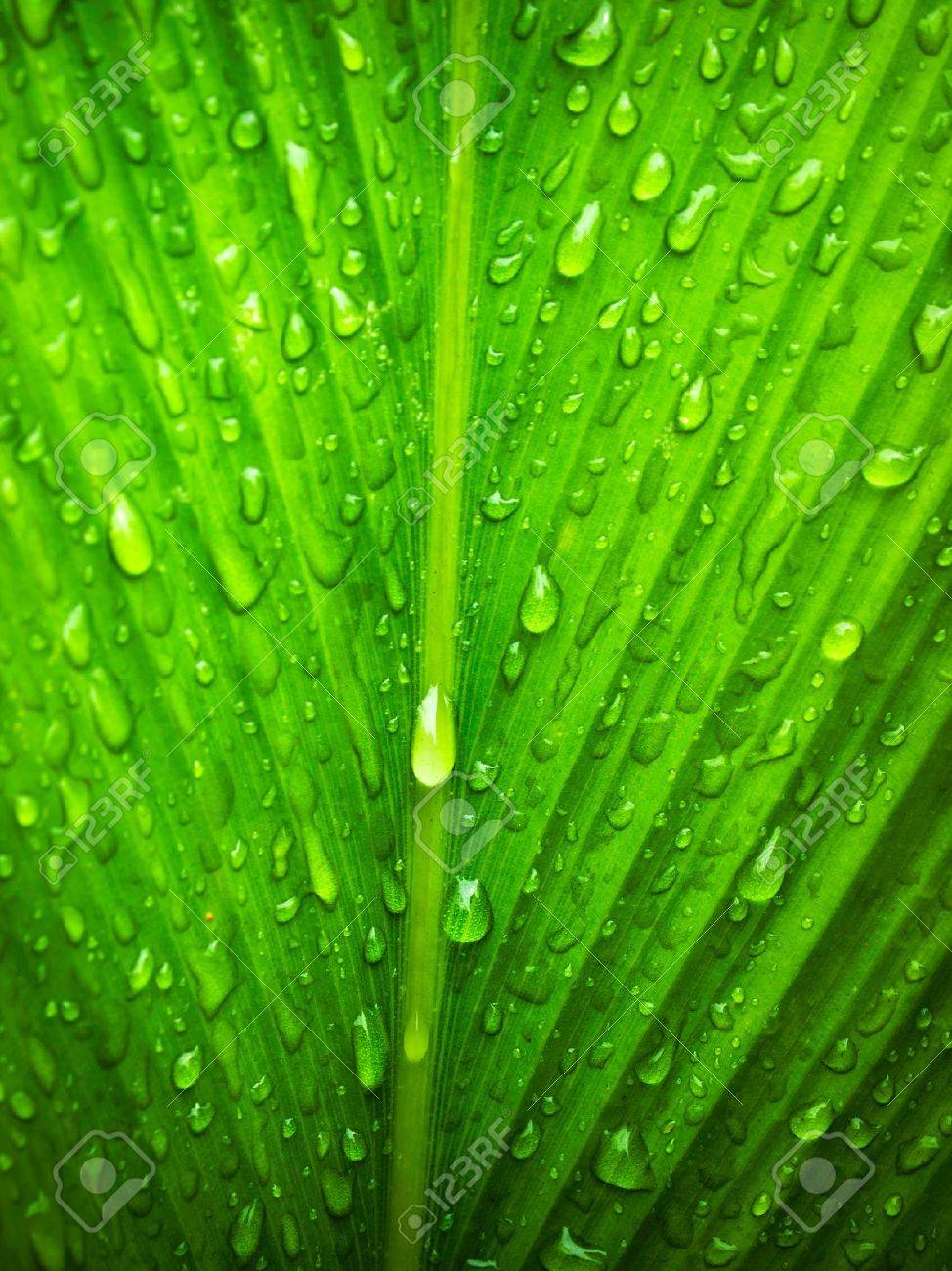 water drop on Green leaf background abstract of nature Stock Photo - 7594316