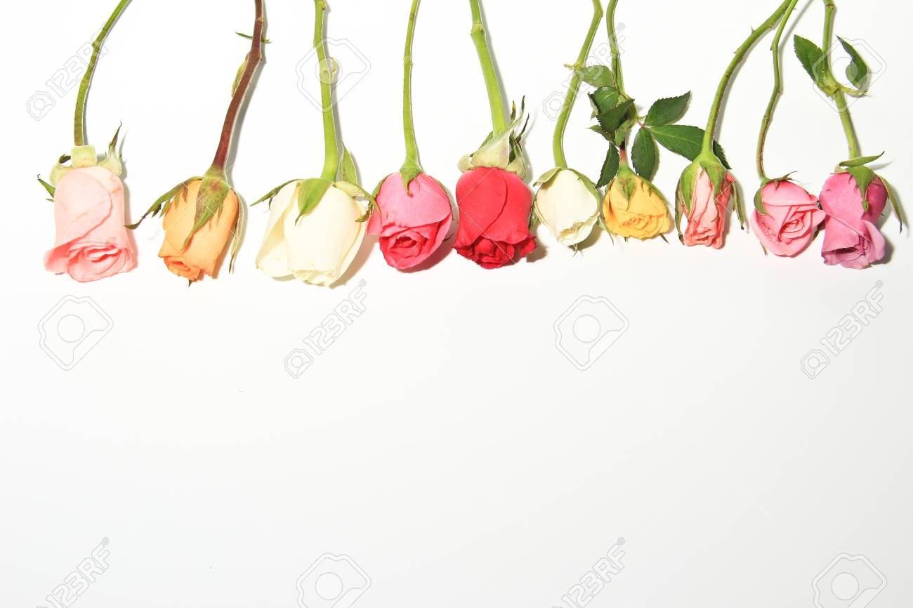 Roses of Romance Stock Photo - 21709456
