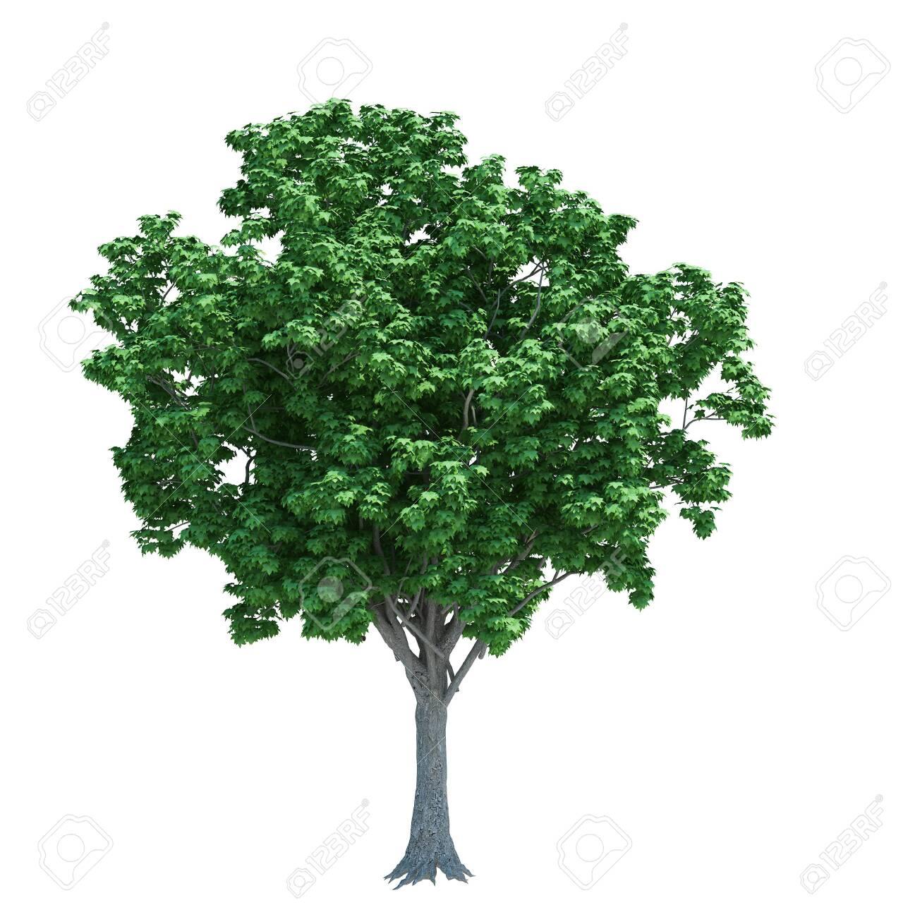 Nature object tree isolated white on background - 149886560