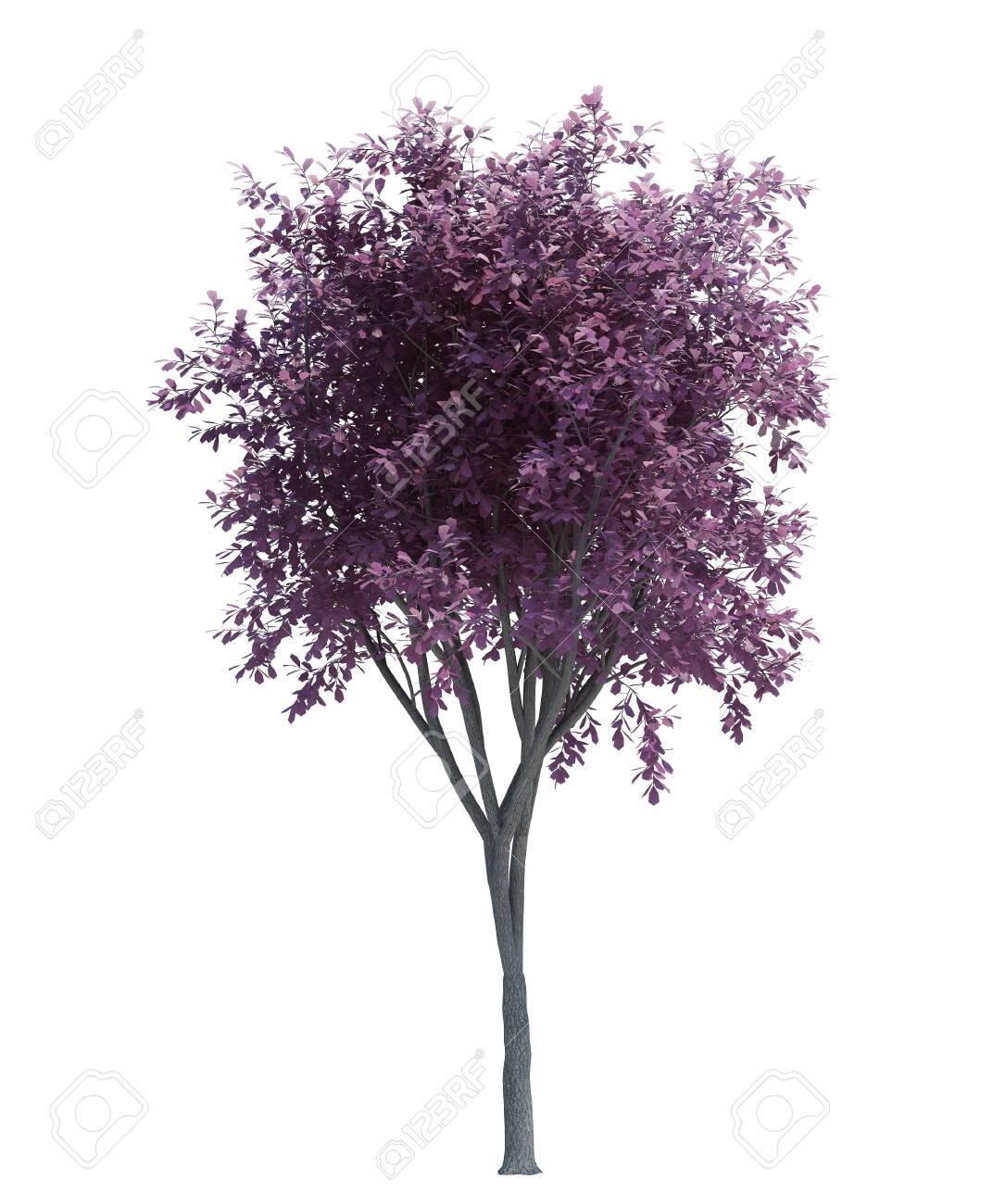 Nature object tree isolated white on background - 154214317