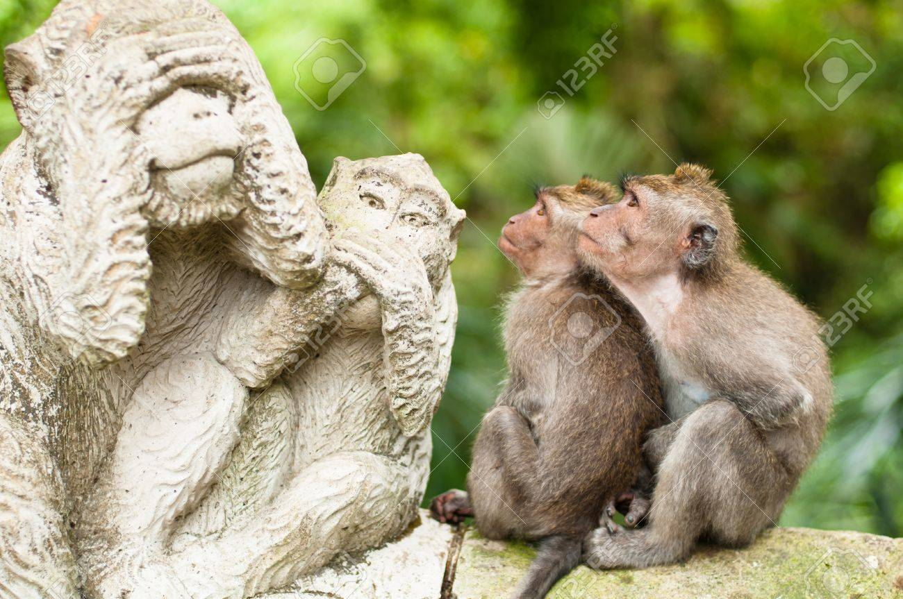 Long-tailed macaques (Macaca fascicularis) in Sacred Monkey Forest, Ubud, Indonesia Stock Photo - 13142876