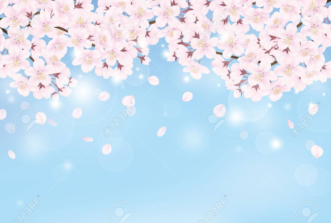 Cherry blossom - 54006443