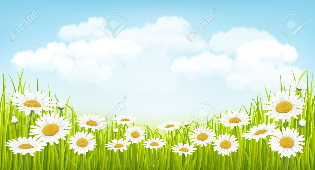 Spring background with green grass, flowers and blue sky - 54881201