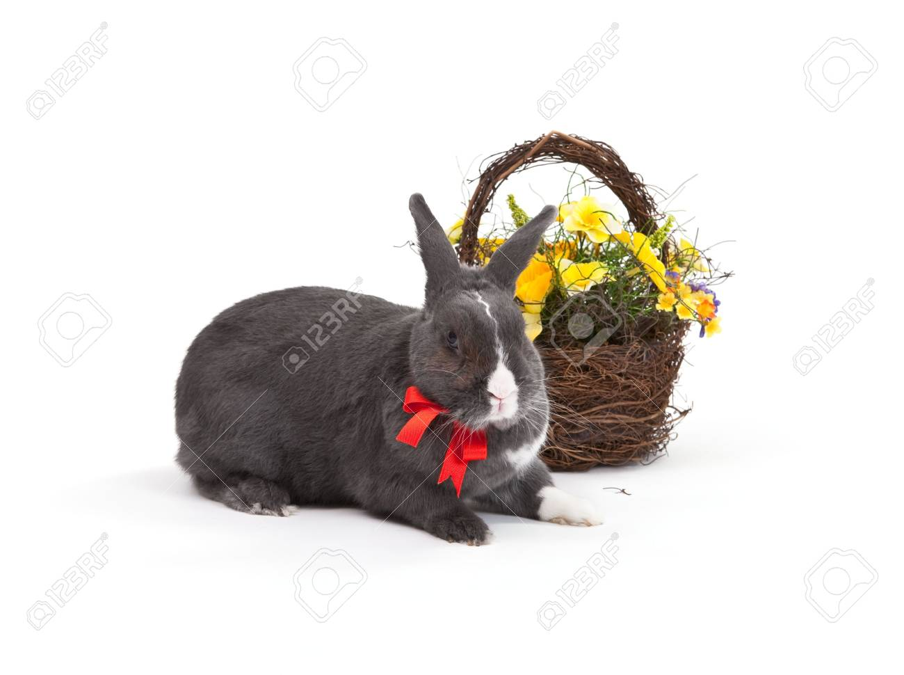 Easter bunny isolated on white background. Stock Photo - 6347727