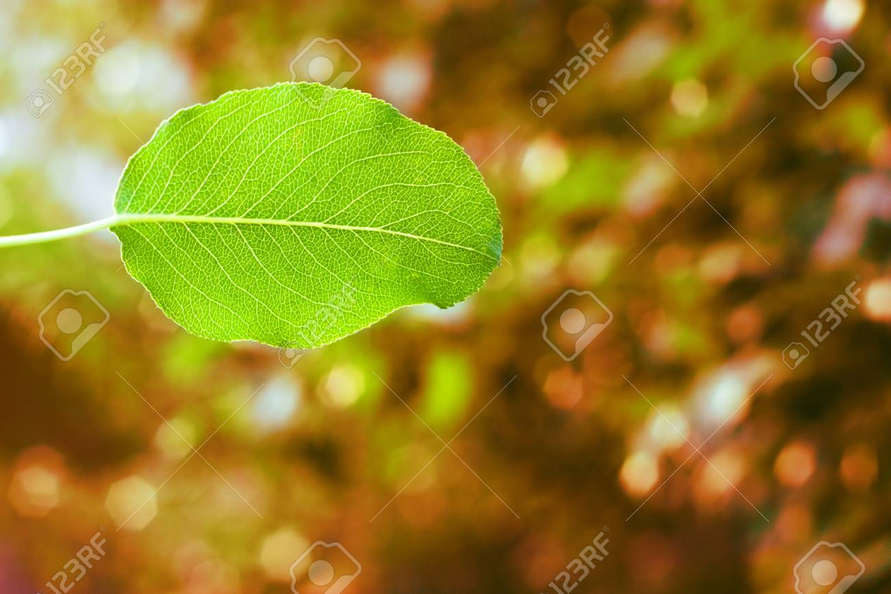 Green leaf on a red background Stock Photo - 14233455