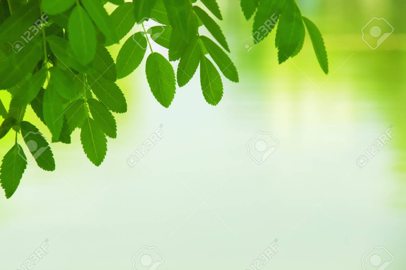 Colorful Summer Leaves  Nice to use as summer background Stock Photo - 16819741