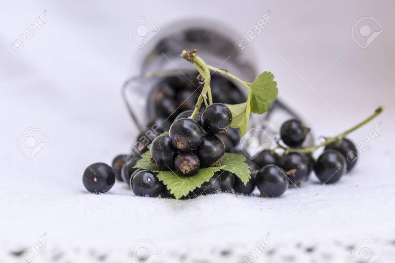 Le Cassis Ribes Nigrum Est Un Arbuste Ligneux De La Famille Des