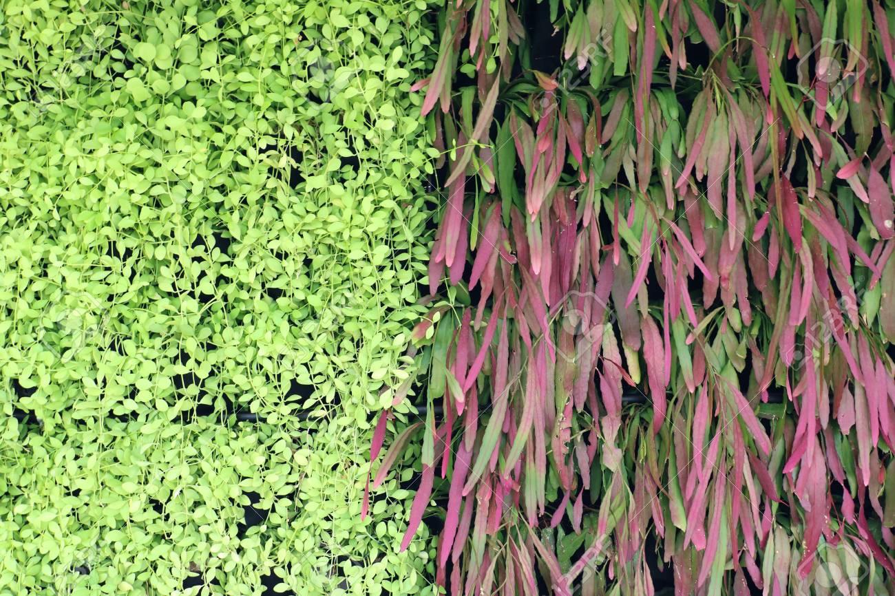 Abstrakt Schwarz Schwarz Boden Grun Pflanze Lizenzfreie Fotos
