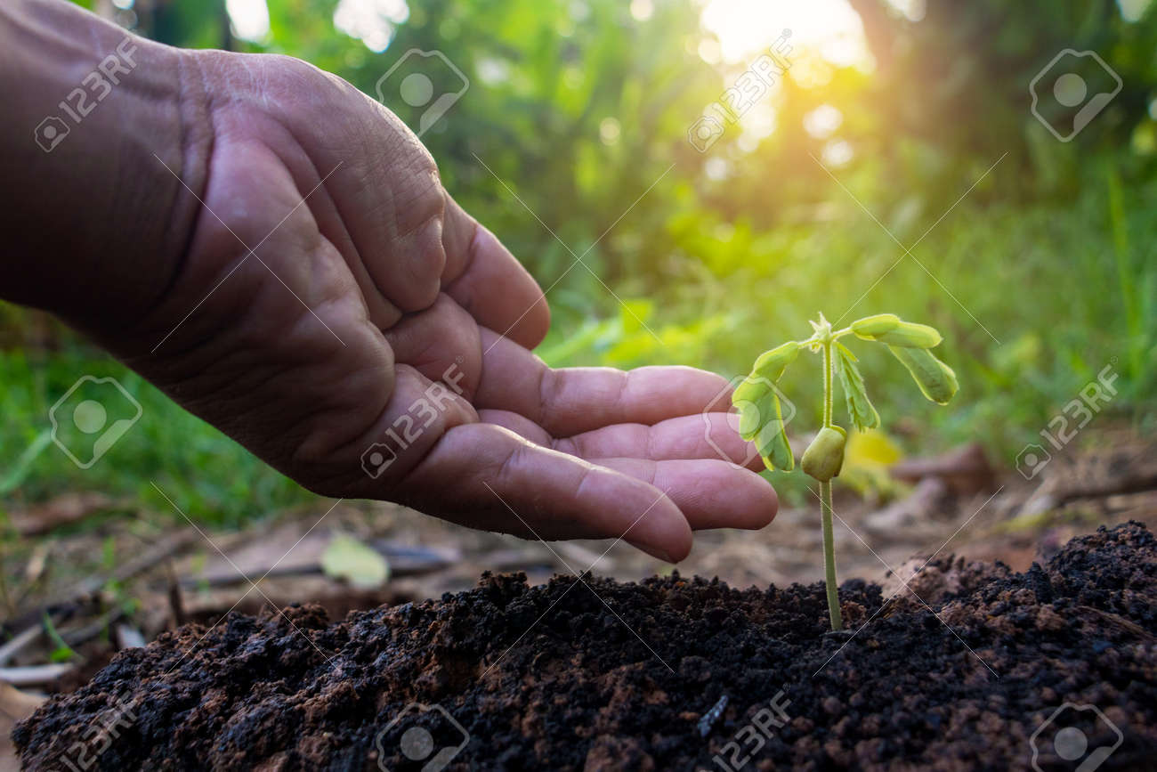 Hand touching growing plant,Young plant and hand under sunlight.Finger and Small plants on the ground in spring.New life concept.Fresh.Photo fresh and Agriculture concept idea. - 169205996