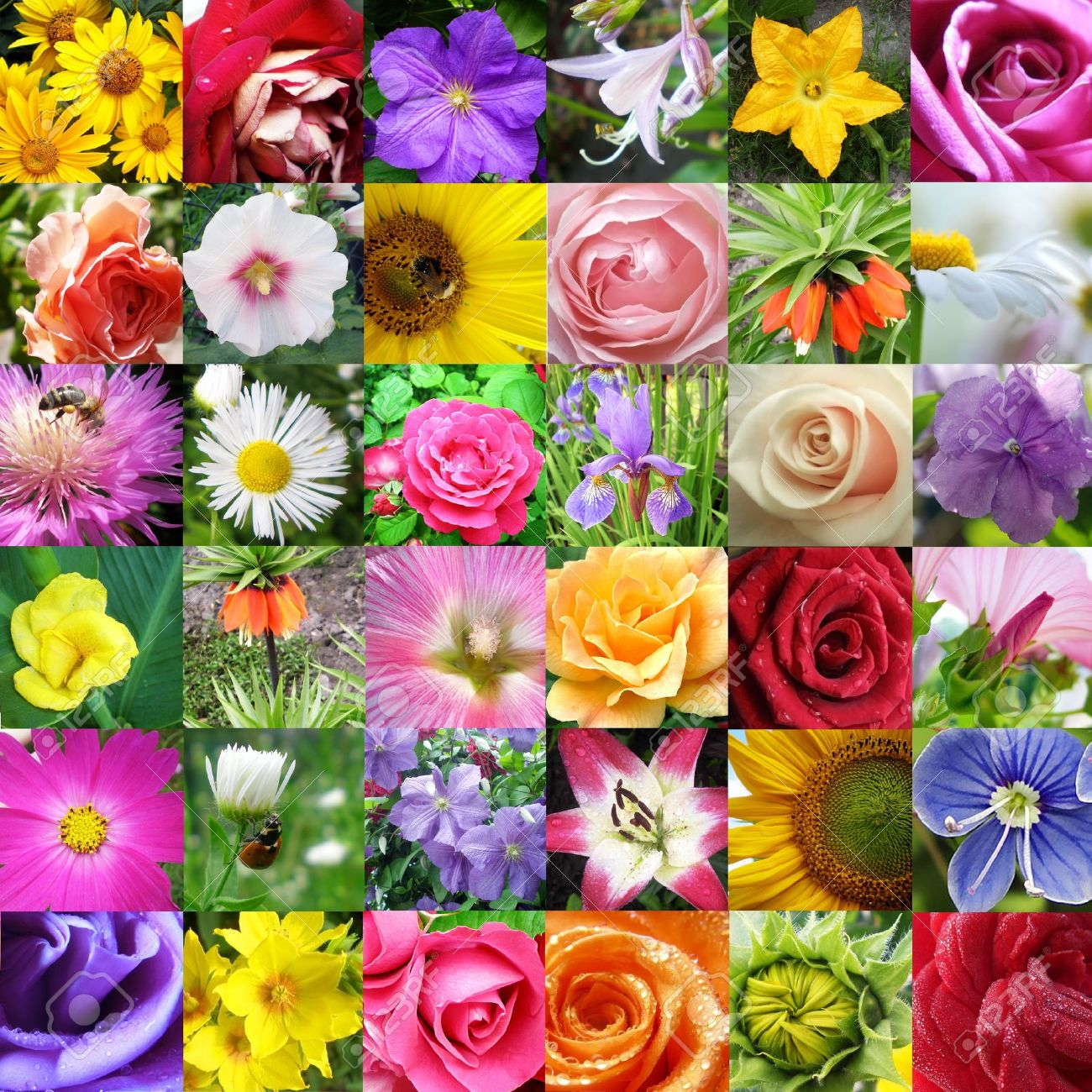 Collage from different beautiful flowers stock photo picture and collage from different beautiful flowers stock photo 12054811 izmirmasajfo