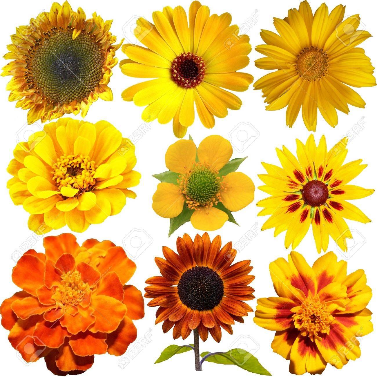 Set Of Orange And Yellow Flowers Isolated On White Stock Photo