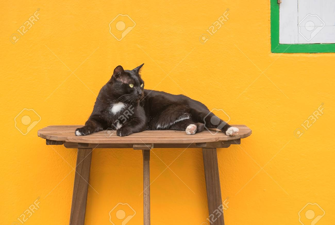 Black Cat On A Wooden Table And Yellow Background Stock Photo Picture And Royalty Free Image Image 68814947