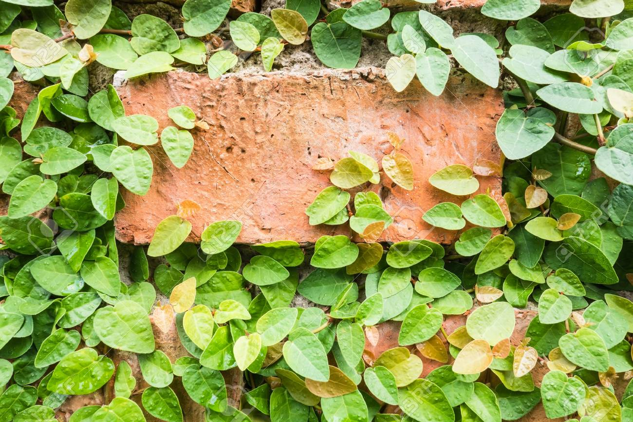Orange Brick Walls Adorned With Green Ivy Wallpaper For Background