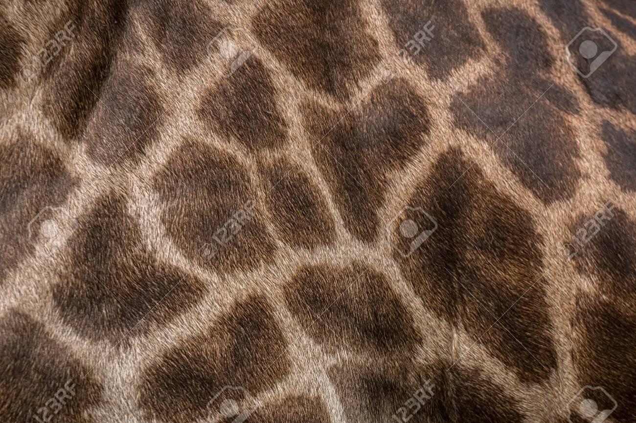 キリン柄背景 の写真素材 画像素材 Image