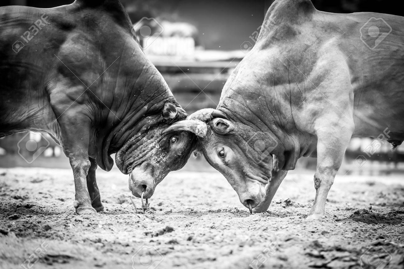 Αποτέλεσμα εικόνας για oxes black and white