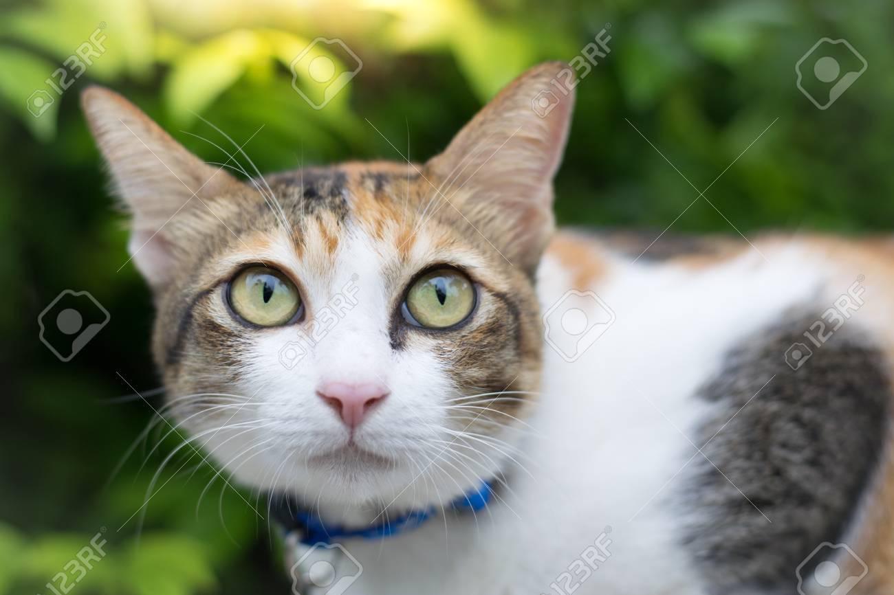 かわいい猫の壁紙や背景を使用して家で昼間探しています 動物の の