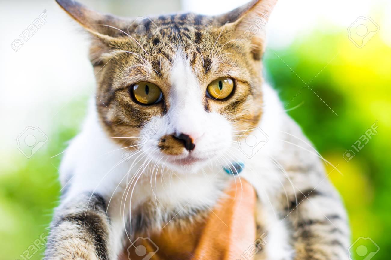かわいい猫は 動物の仕事のための壁紙や背景を使用して家で昼間遊んで