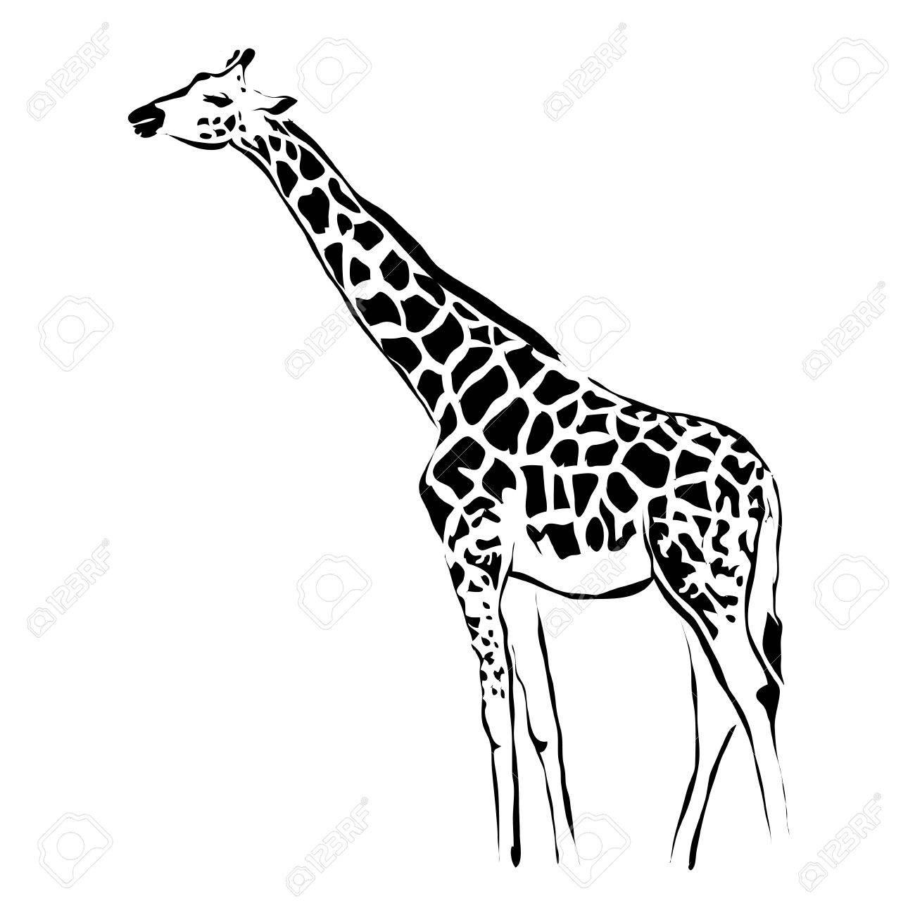 outline giraffe vector image can be use for logo royalty free rh 123rf com giraffe vector silhouette giraffe vector pattern
