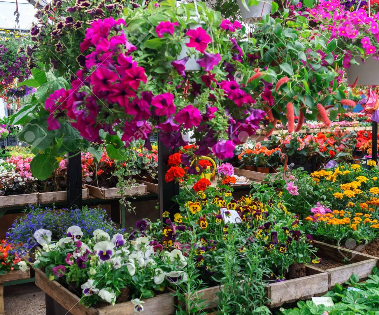 Rows of flower seedlings in the village market - 136072755