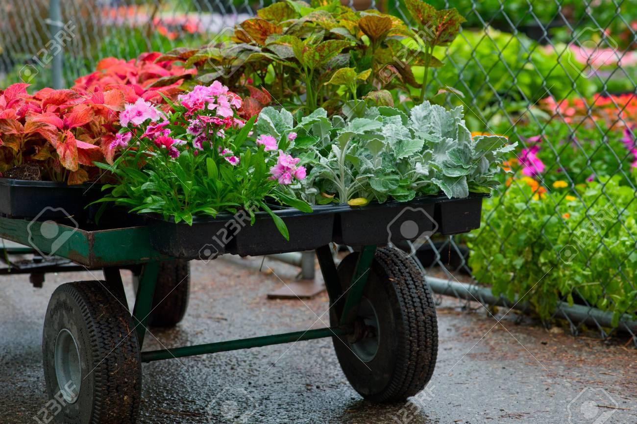 Decorative Green Plants And Seedlings Nursery Garden Stock Photo ...