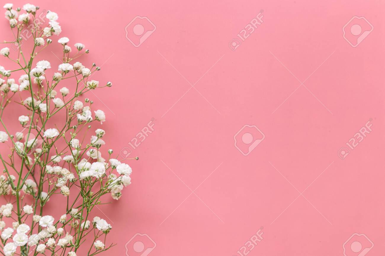Gypsophila White Baby S Breath Flower On Pastel Pink Background Stock Photo Picture And Royalty Free Image Image 142838329