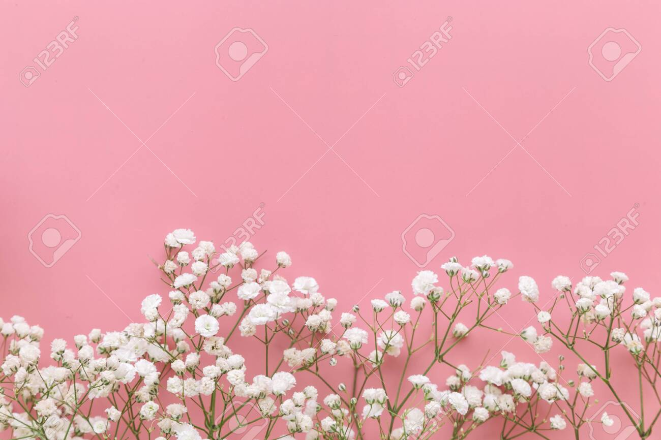Gypsophila White Baby S Breath Flower On Pastel Pink Background Stock Photo Picture And Royalty Free Image Image 142838330